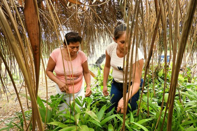 En la Amazonia boliviana, mujeres protegen el bosque y se empoderan